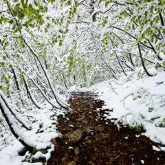 Снег на майской зелени